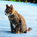 『猫背・姿勢が悪い』