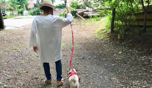 『散歩のススメ』
