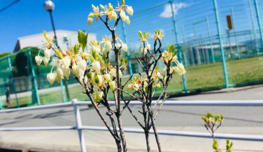 『くぼた整骨院のガーデニング日記〜2020年4月〜』